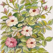 dog-rose-by-gordon-yapp-1