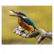 Kingfisher for website product gallery 1