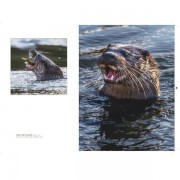 Otter 2 for website gallery 1