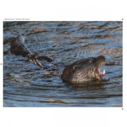 Otter page for website gallery 1