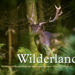 Wilderland cover and pics andrew fusek peters-1