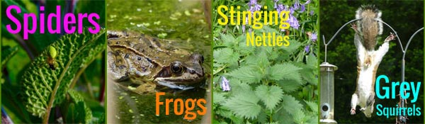 Spiders, Frogs, Stinging Nettles and Grey Squirrels